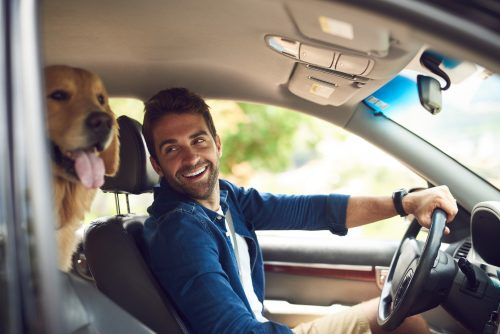 Driving with Your Dog Could Be Dangerous: Learn What a Recent Poll Revealed
