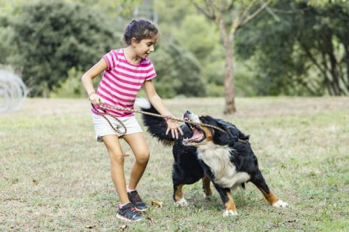 Do You Know the Specific Steps to Take if You Are Injured by a Dog in Phoenix?